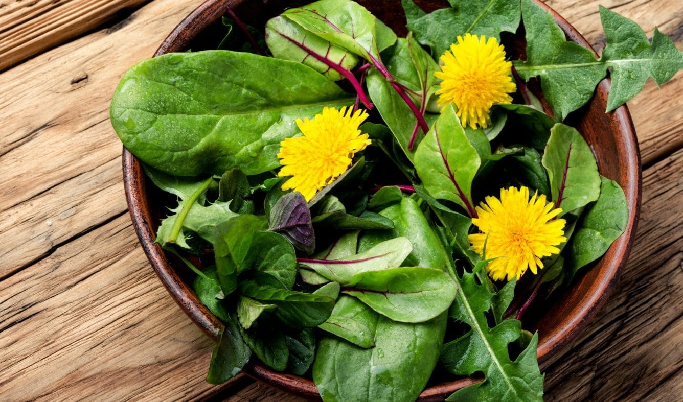 Dandelion water retention and liver health Onyx Integrative Medicine Gilbert AZ