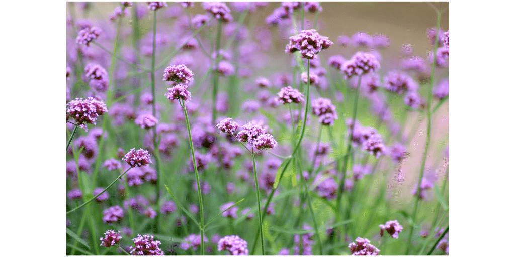 natural remedies for depression gilbert az