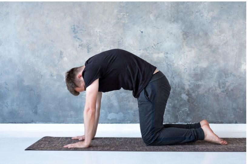 cat cow yoga pose