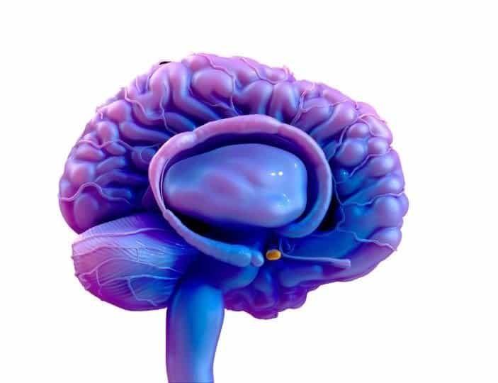 Pituitary Gland (HPA) Hormone Gilbert AZ